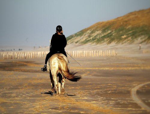 Le casque d'équitation
